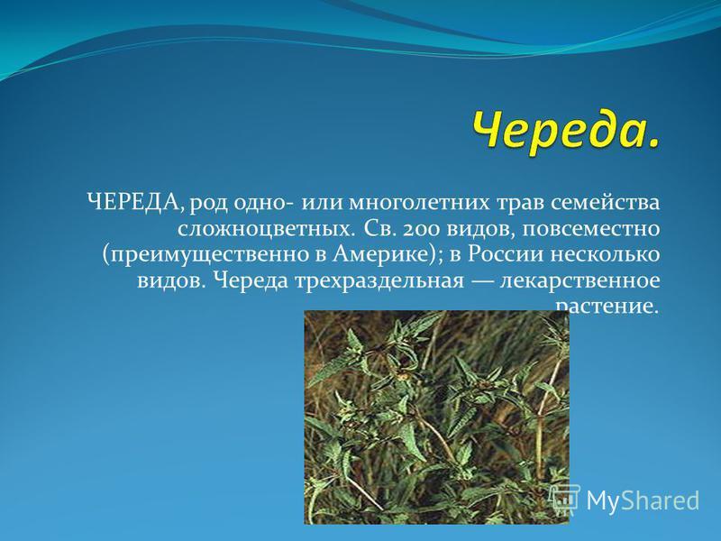 ЧЕРЕДА, род одно- или многолетних трав семейства сложноцветных. Св. 200 видов, повсеместно (преимущественно в Америке); в России несколько видов. Череда трехраздельная лекарственное растение.