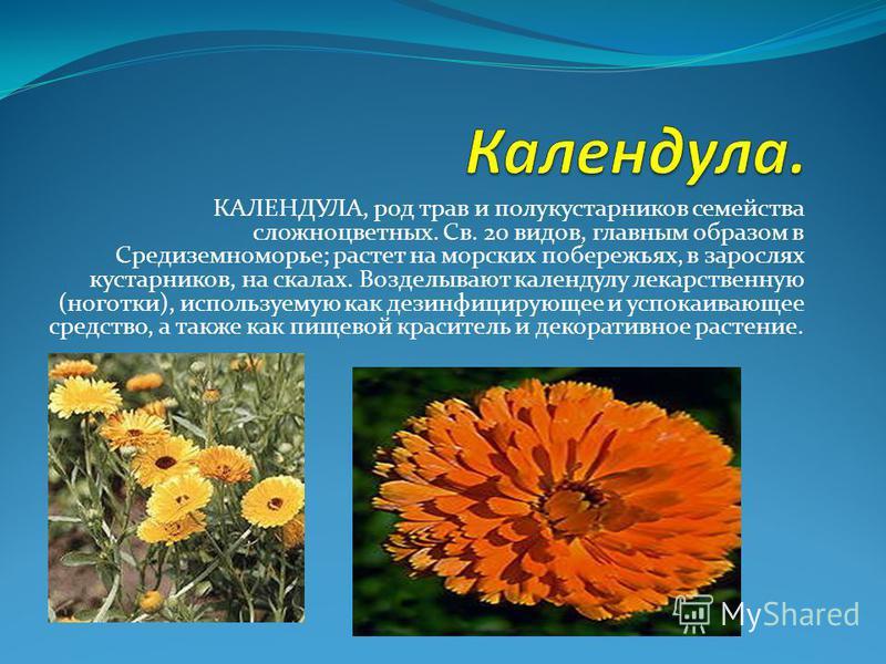 КАЛЕНДУЛА, род трав и полукустарников семейства сложноцветных. Св. 20 видов, главным образом в Средиземноморье; растет на морских побережьях, в зарослях кустарников, на скалах. Возделывают календулу лекарственную (ноготки), используемую как дезинфици