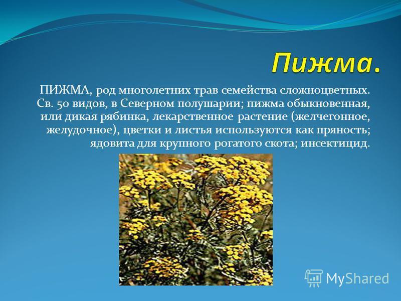 ПИЖМА, род многолетних трав семейства сложноцветных. Св. 50 видов, в Северном полушарии; пижма обыкновенная, или дикая рябинка, лекарственное растение (желчегонное, желудочное), цветки и листья используются как пряность; ядовита для крупного рогатого