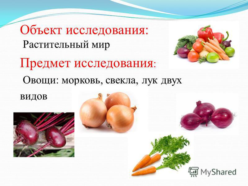 Объект исследования: Растительный мир Предмет исследования : Овощи: морковь, свекла, лук двух видов