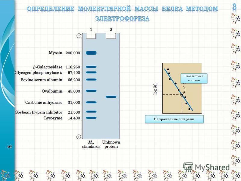 Направление миграциии Неизвестный протеин