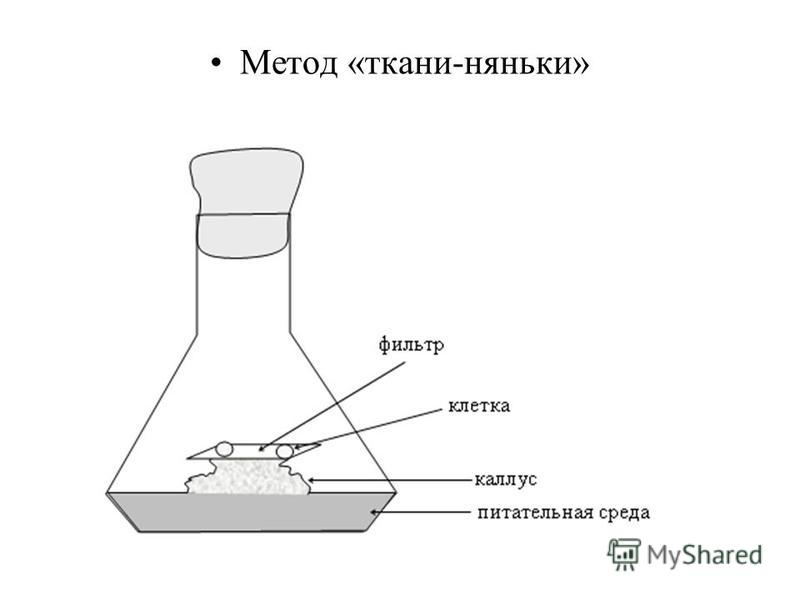 Метод «ткани-няньки»
