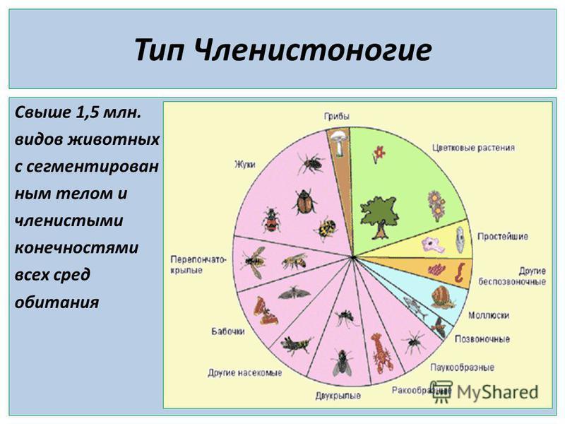Тип Членистоногие Свыше 1,5 млн. видов животных с сегментирован ним телом и членистыми конечностями всех сред обитания