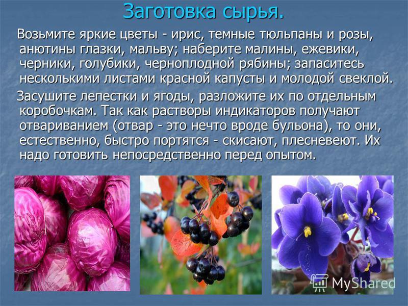 Заготовка сырья. Возьмите яркие цветы - ирис, темные тюльпаны и розы, анютины глазки, мальву; наберите малины, ежевики, черники, голубики, черноплодной рябины; запаситесь несколькими листами красаой капусты и молодой свеклой. Возьмите яркие цветы - и