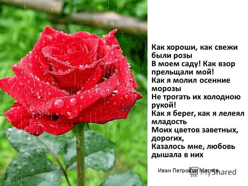 Как хороши, как свежи были розы В моем саду! Как взор прельщали мой! Как я молил осение морозы Не трогать их холодною рукой! Как я берег, как я лелеял младость Моих цветов заветных, дорогих, Казалось мне, любовь дышала в них Иван Петрович Мятлев