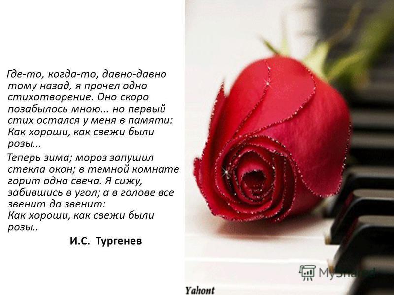 Где-то, когда-то, давно-давно тому назад, я прочел одно стихотворение. Оно скоро позабылось мною... но первый стих остался у меня в памяти: Как хороши, как свежи были розы... Теперь зима; мороз запушил стекла окон; в темной комнате горит одна свеча.
