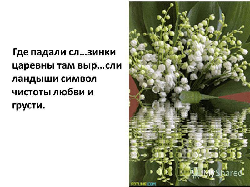 Где падали сл…зинки царевны там выр…если ландыши символ чистоты любви и грусти.
