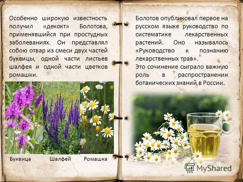 Особенно широкую известность получил «декокт» Болотова, применявшийся при простудных заболеваниях. Он представлял собою отвар из смеси двух частей буквицы, одной части листьев шалфея и одной части цветков ромашки. Буквица ШалфейРомашка Болотов опубли