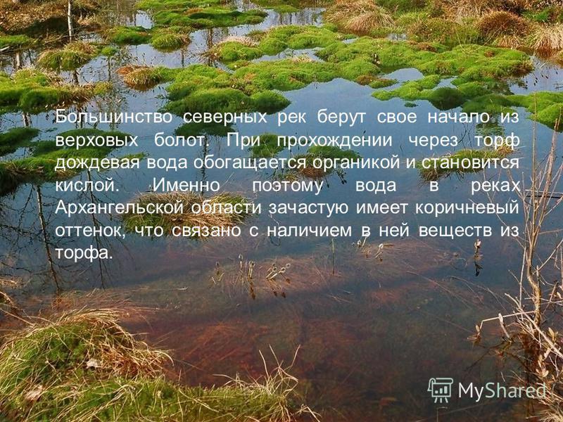 Большинство северных рек берут свое начало из верховых болот. При прохождении через торф дождевая вода обогащается органикой и становится кислой. Именно поэтому вода в реках Архангельской области зачастую имеет коричневый оттенок, что связано с налич