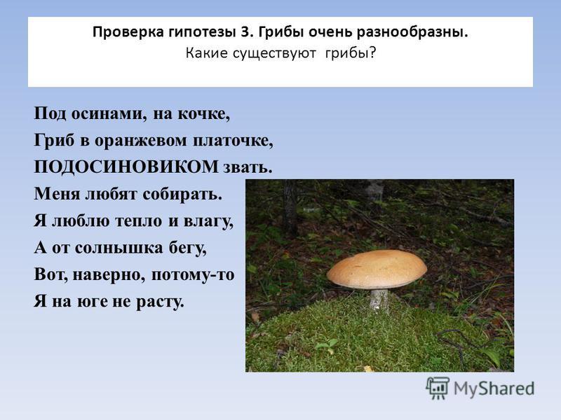 Проверка гипотезы 3. Грибы очень разнообразны. Какие существуют грибы? Под осинами, на кочке, Гриб в оранжевом платочке, ПОДОСИНОВИКОМ звать. Меня любят собирать. Я люблю тепло и влагу, А от солнышка бегу, Вот, наверно, потому-то Я на юге не расту.