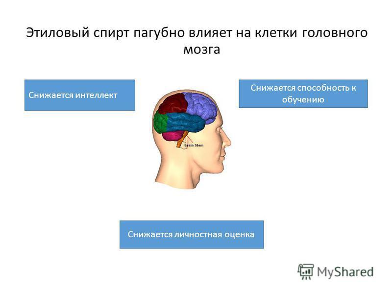 Этиловый спирт пагубно влияет на клетки головного мозга Снижается способность к обучению Снижается интеллект Снижается личностная оценка