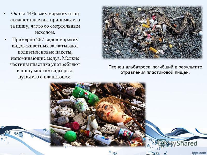 Около 44% всех морских птиц съедают пластик, принимая его за пищу, часто со смертельным исходом. Примерно 267 видов морских видов животных заглатывают полиэтиленовые пакеты, напоминающие медуз. Мелкие частицы пластика употребляют в пищу многие виды р