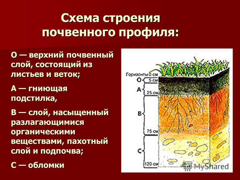 О верхний почвенный слой, состоящий из листьев и веток; А гниющая подстилка, В слой, насыщенный разлагающимися органическими веществами, пахотный слой и подпочва; С обломки Схема строения почвенного профиля: