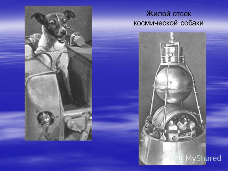 Жилой отсек космической собаки