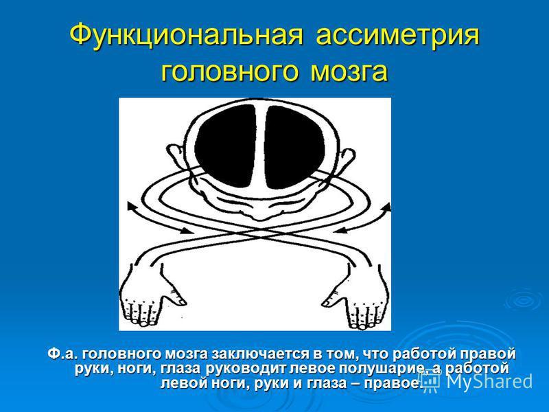 Функциональная асимметрия головного мозга Ф.а. головного мозга заключается в том, что работой правой руки, ноги, глаза руководит левое полушарие, а работой левой ноги, руки и глаза – правое.