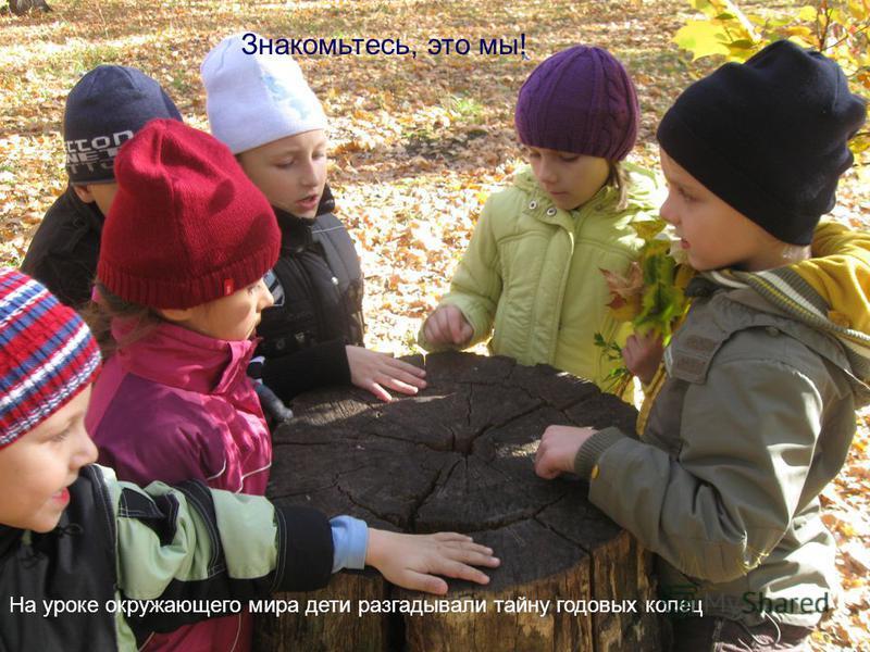 На уроке окружающего мира дети разгадывали тайну годовых колец Знакомьтесь, это мы!