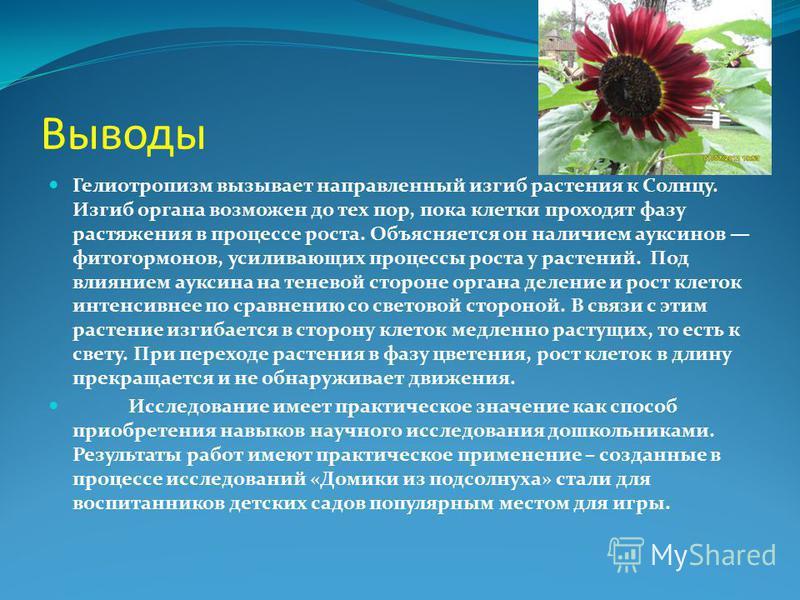 Выводы Гелиотропизм вызывает направленный изгиб растения к Солнцу. Изгиб органа возможен до тех пор, пока клетки проходят фазу растяжения в процессе роста. Объясняется он наличием ауксинов фитогормонов, усиливающих процессы роста у растений. Под влия
