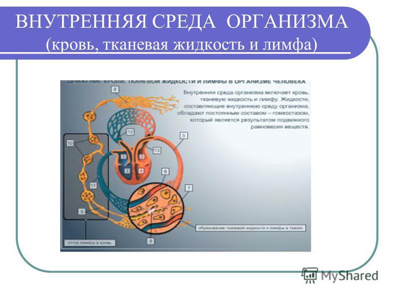 ВНУТРЕННЯЯ СРЕДА ОРГАНИЗМА (кровь, тканевая жидкость и лимфа)