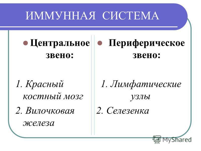 ИММУННАЯ СИСТЕМА Центральное звено: 1. Красный костный мозг 2. Вилочковая железа Периферическое звено: 1. Лимфатические узлы 2. Селезенка