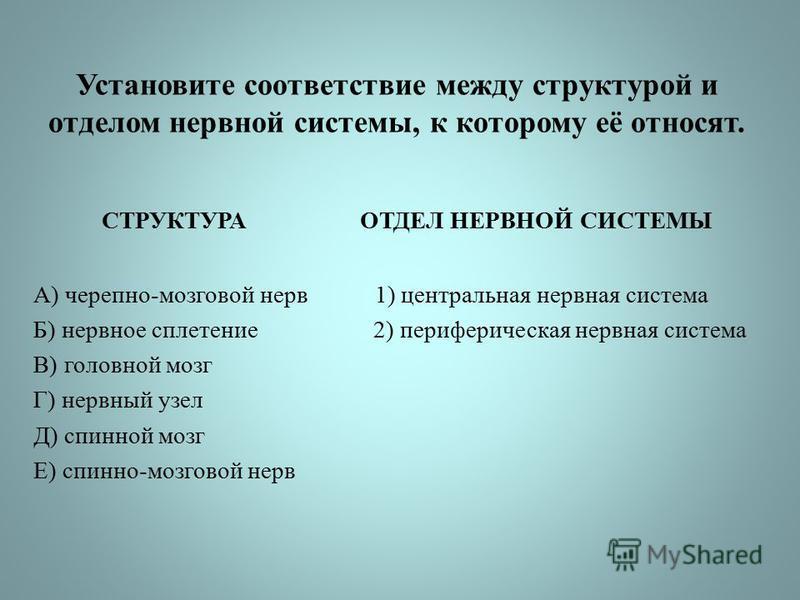 Установите соответствие между структурой и отделом нервной системы, к которому её относят. СТРУКТУРА ОТДЕЛ НЕРВНОЙ СИСТЕМЫ А) черепно-мозговой нерв 1) центральная нервная система Б) нервное сплетение 2) периферическая нервная система В) головной мозг