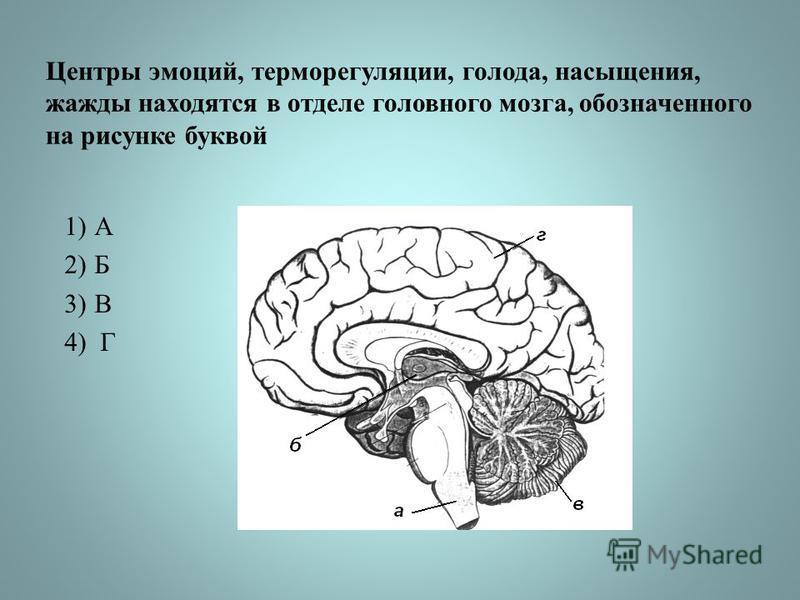 Центры эмоций, терморегуляции, голода, насыщения, жажды находятся в отделе головного мозга, обозначенного на рисунке буквой 1)А 2)Б 3)В 4) Г