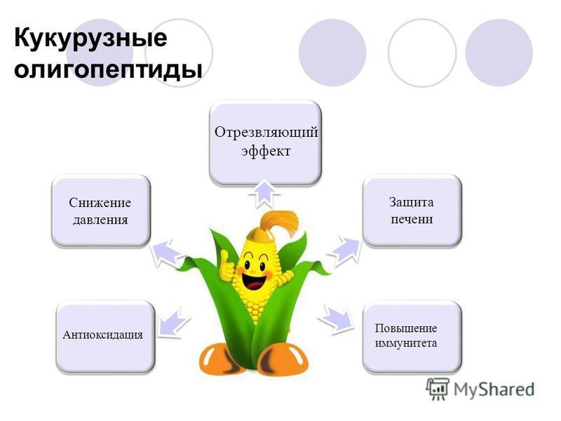 Кукурузные олигопептиды Снижение давления Антиоксидация Защита печени Повышение иммунитета Отрезвляющий эффект