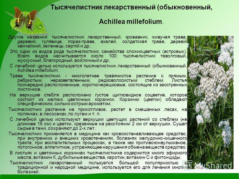 Тысячелистник лекарственный (обыкновенный, Achillea millefolium. Другие названия: тысячелистник лекарственный, кровавник, живучая трава, деревий, гулявица, порез-трава, ахалей, солдатская трава, деревій звичайний, зеленець, серпій и др. Это один из в
