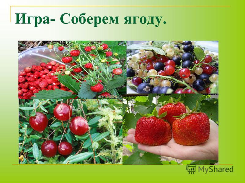 Игра- Соберем ягоду.