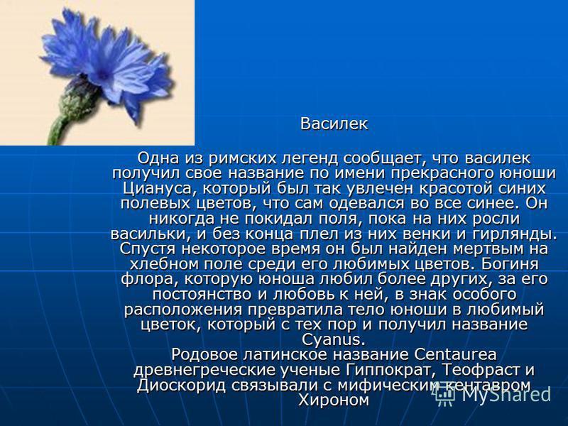 Василек Одна из римских легенд сообщает, что василек получил свое название по имени прекрасного юноши Циануса, который был так увлечен красотой синих полевых цветов, что сам одевался во все синее. Он никогда не покидал поля, пока на них росли васильк