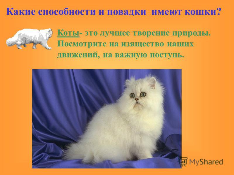 Коты- это лучшее творение природы. Посмотрите на изящество наших движений, на важную поступь. Какие способности и повадки имеют кошки?