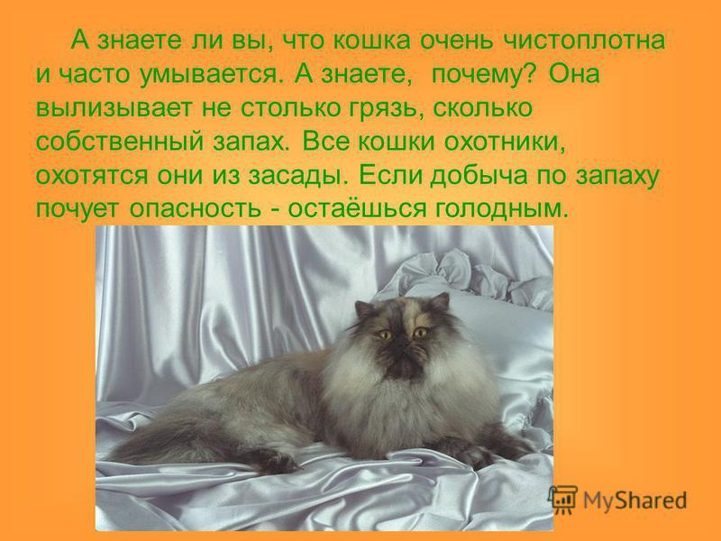 А знаете ли вы, что кошка очень чистоплотна и часто умывается. А знаете, почему? Она вылизывает не столько грязь, сколько собственный запах. Все кошки охотники, охотятся они из засады. Если добыча по запаху почует опасность - остаёшься голодным.