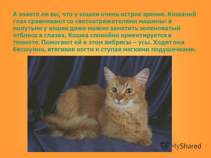 А знаете ли вы, что у кошки очень острое зрение. Кошачий глаз сравнивают со светоотражателями машины: в полутьме у кошек даже можно заметить зеленоватый отблеск в глазах. Кошка спокойно ориентируется в темноте. Помогают ей в этом вибриссы – усы. Ходи