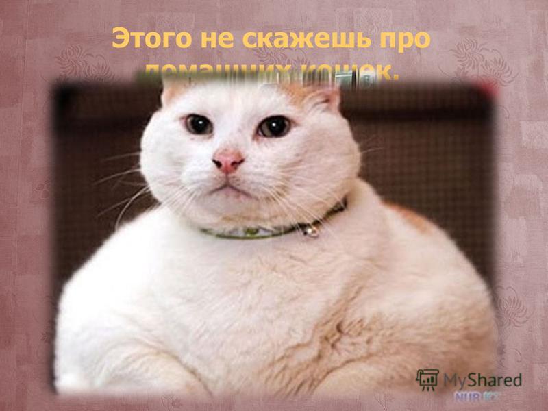 Этого не скажешь про домашних кошек.