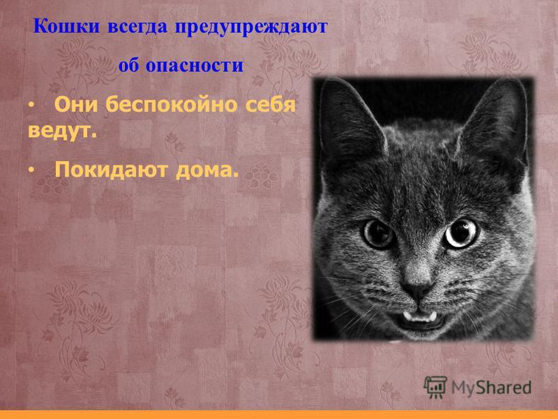 Почему кошка беспокойно себя ведет