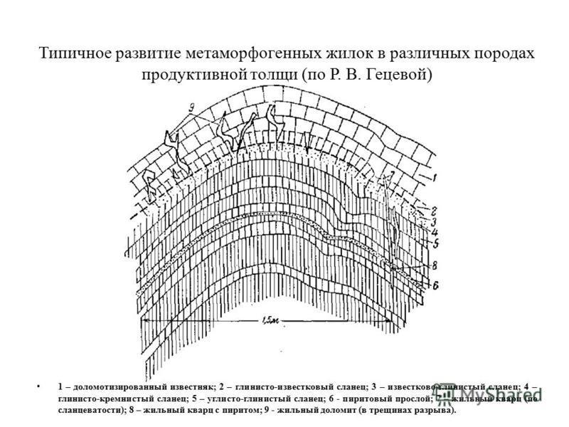 Типичное развитие метаморфогенных жилок в различных породах продуктивной толщи (по Р. В. Гецевой) 1 – доломотизированный известняк; 2 – глинисто-известковый сланец; 3 – известково-глинистый сланец; 4 – глинисто-кремнистый сланец; 5 – углисто-глинисты