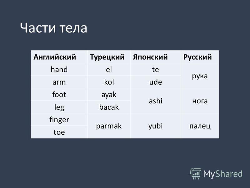 Лексическая типология Как языки структурируют одни и те же фрагменты действительности? части тела цвета термины родства и др.