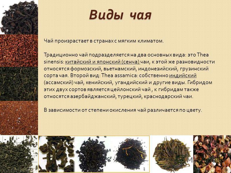 Виды чая. Чай произрастает в странах с мягким климатом. Традиционно чай подразделяется на два основных вида: это Thea sinensis: китайский и японский (сенча) чаи, к этой же разновидности относятся формозский, вьетнамский, индонезийский, грузинский сор