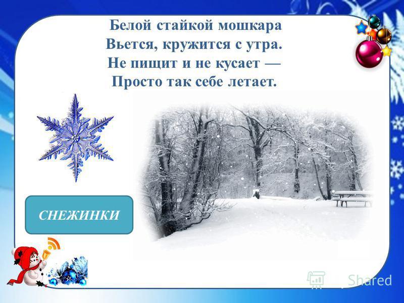 http://fonwall.ru/user- content/uploads/wall/mid/52/snejinki_fon_zastavka_paporotnik_vetka_15. jpg Белой стайкой мошкара Вьется, кружится с утра. Не пищит и не кусает Просто так себе летает. СНЕЖИНКИ