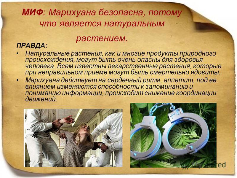 МИФ: Марихуана безопасна, потому что является натуральным растением. ПРАВДА: Натуральные растения, как и многие продукты природного происхождения, могут быть очень опасны для здоровья человека. Всем известны лекарственные растения, которые при неправ