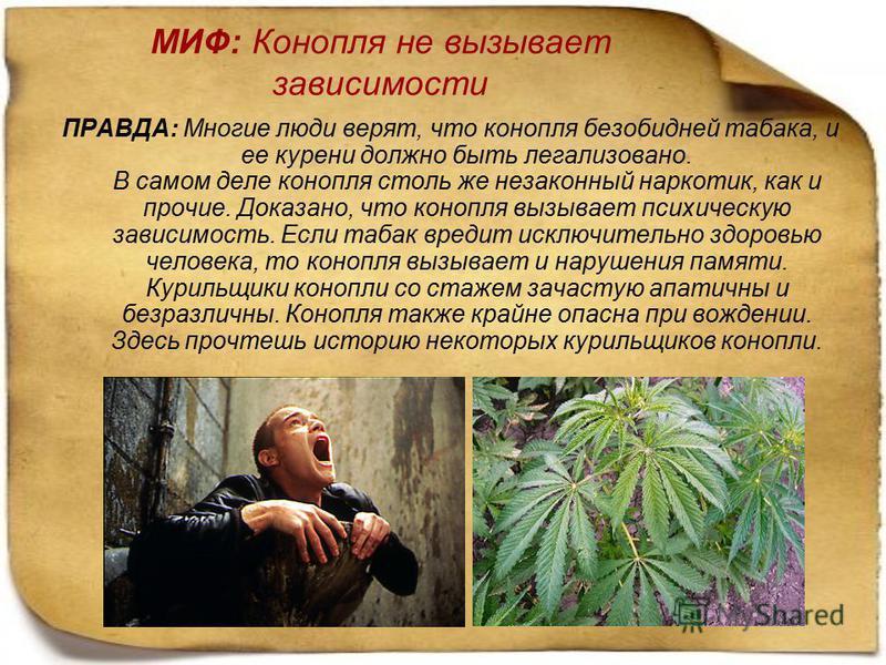 МИФ: Конопля не вызывает зависимости ПРАВДА: Многие люди верят, что конопля безобидней табака, и ее курени должно быть легализовано. В самом деле конопля столь же незаконный наркотик, как и прочие. Доказано, что конопля вызывает психическую зависимос