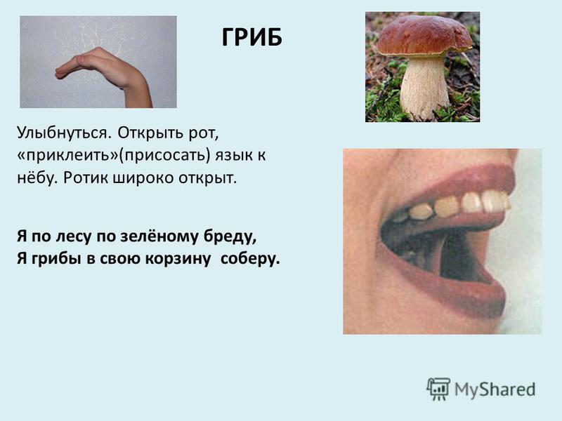 ГРИБ Улыбнуться. Открыть рот, «приклеить»(присосать) язык к нёбу. Ротик широко открыт. Я по лесу по зелёному бреду, Я грибы в свою корзину соберу.