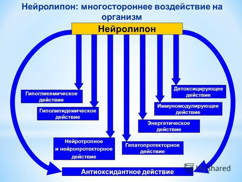 Детоксицирующее действие Нейротропное и нейропротекторное действие Антиоксидантное действие Гиполипидемическое действие Энергетическое действие Иммуномодулирующее действие Гепатопротекторное действие Нейролипон: многостороннее воздействие на организм