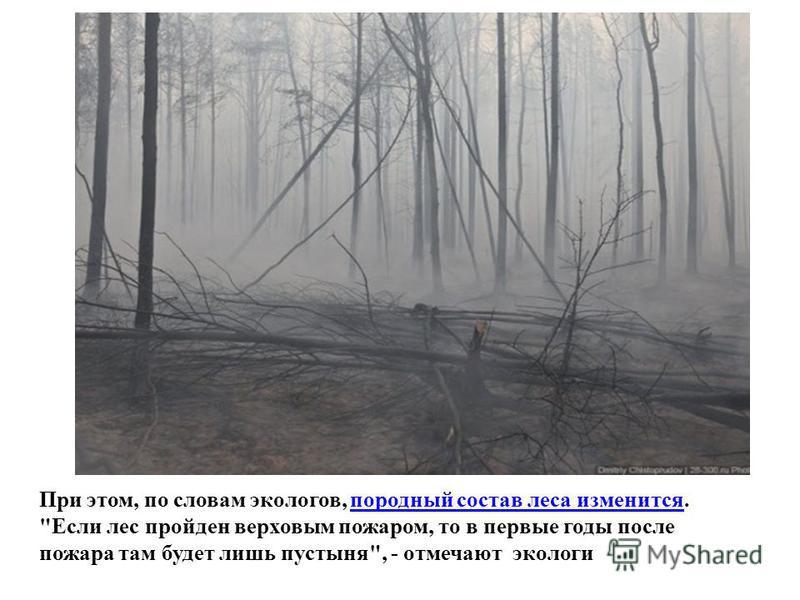 При этом, по словам экологов, породный состав леса изменится. Если лес пройден верховым пожаром, то в первые годы после пожара там будет лишь пустыня, - отмечают экологи породный состав леса изменится