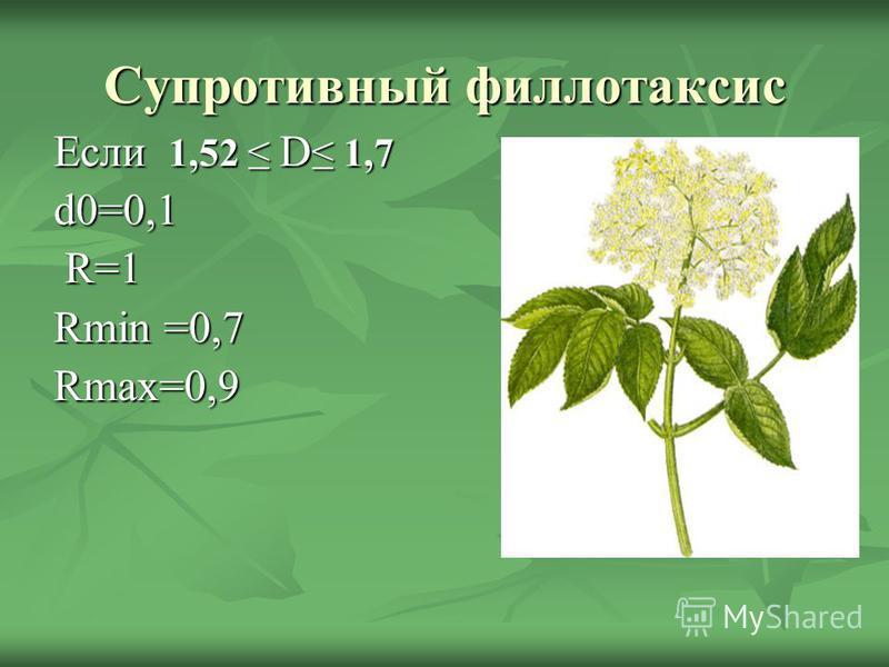 Супротивный филлотаксис Если 1,52 D 1,7 d0=0,1 R=1 R=1 Rmin =0,7 Rmax=0,9