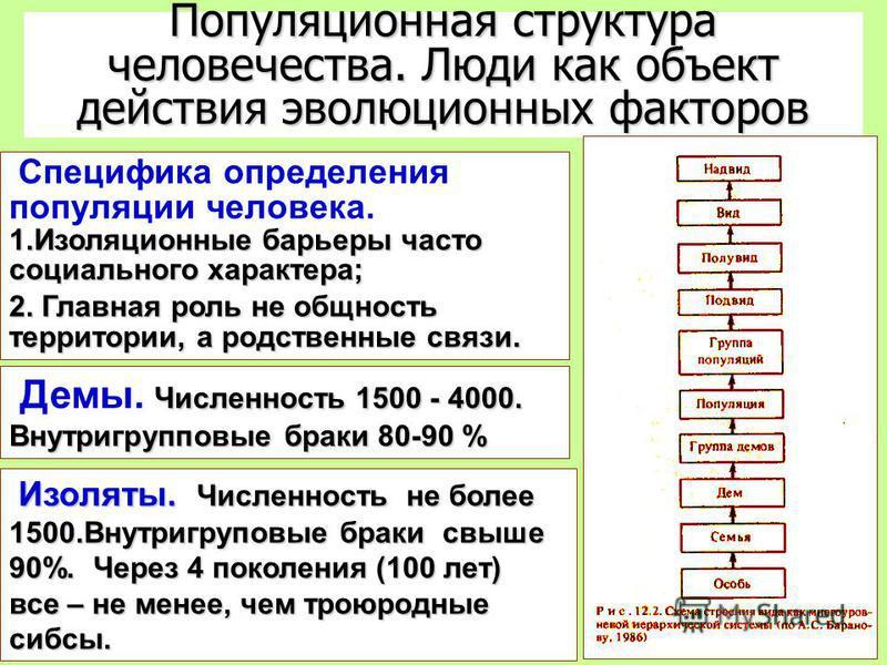 Популяционная структура человечества. Люди как объект действия эволюционных факторов 1. Изоляционные барьеры часто социального характера; Специфика определения популяции человека. 1. Изоляционные барьеры часто социального характера; 2. Главная роль н