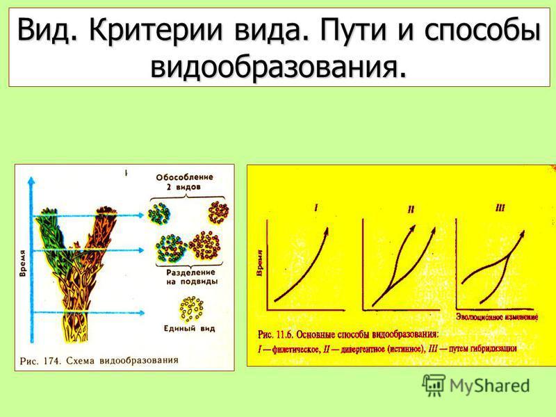 Вид. Критерии вида. Пути и способы видообразования.