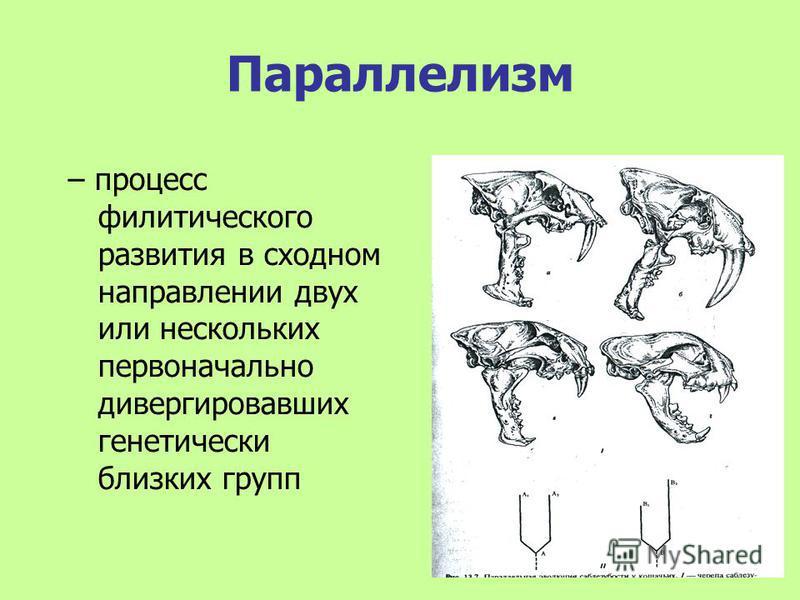 Параллелизм – процесс филитического развития в сходном направлении двух или нескольких первоначально дивергировавших генетически близких групп