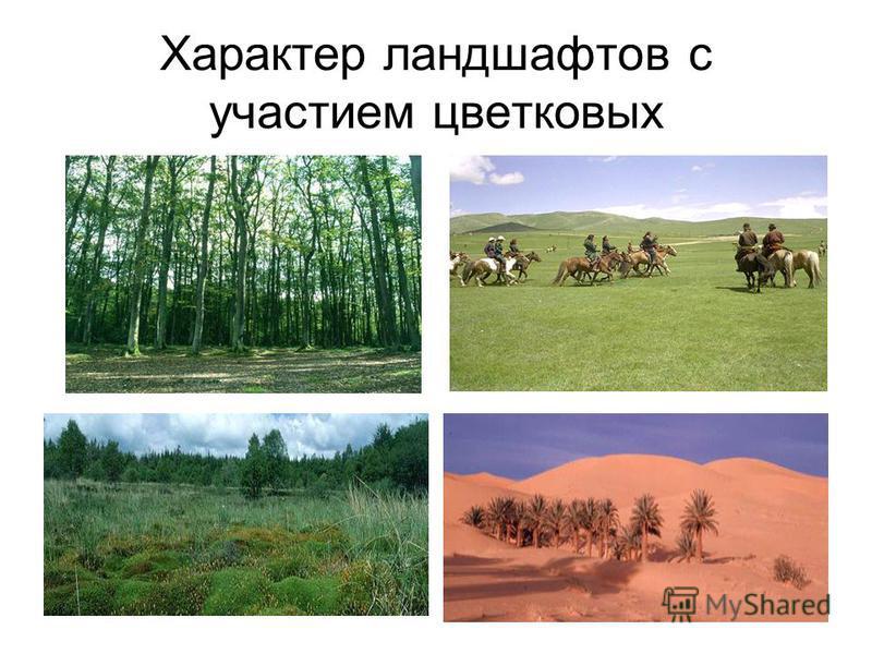 Характер ландшафтов с участием цветковых