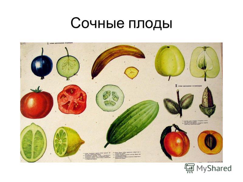 Сочные плоды