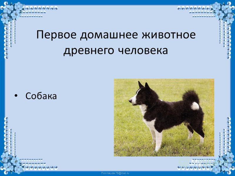 FokinaLida.75@mail.ru Первое домашнее животное древнего человека Собака